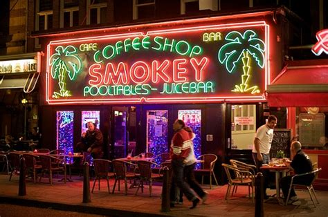 best plant store in amsterdam the war on drugs cannabis selling coffee shop ban for tourists hostelbookers
