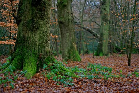 woodland trees woodland trees 6