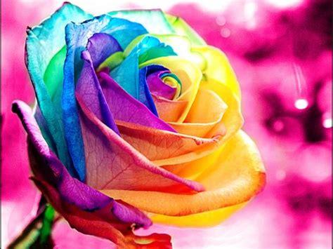 imagenes de rosas diferentes colores imagenes de rosas