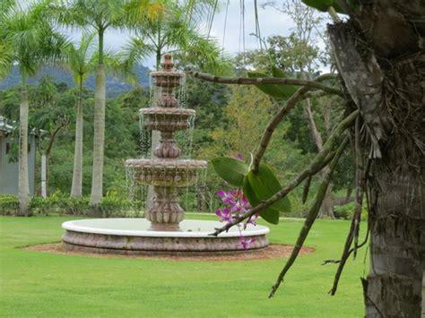 Caguas Botanical Garden Pink Cone Picture Of Caguas Botanical Garden Quot William Miranda Marin Quot Caguas Tripadvisor