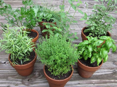 herbal garden do you know how easy it is to start your first herb garden
