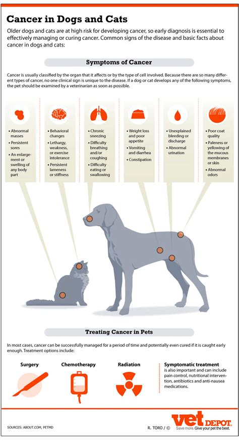 symptoms of brain tumor in dogs signs of cancer in dogs cats vetdepot