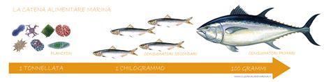 catena alimentare uomo la catena alimentare marina