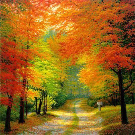 autumn woods netherlands wallpaper hd