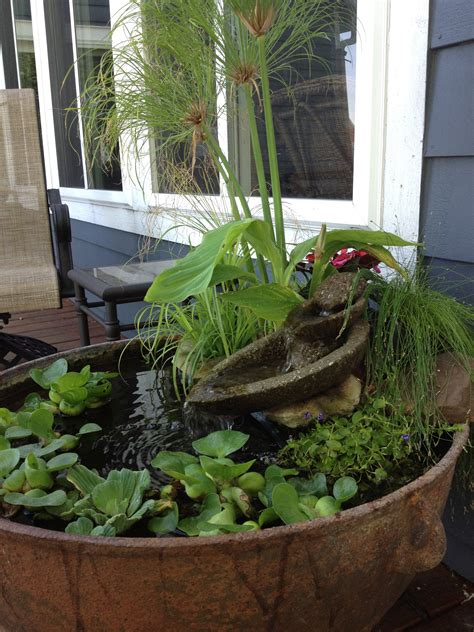 container water gardens container water garden garden stuff i to do
