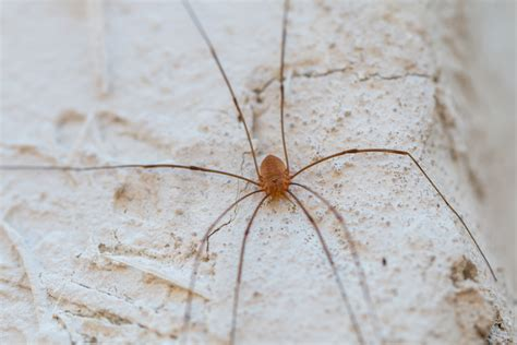 how to keep spiders out of basement 5 ways to keep spiders out of your home valley pest oshkosh nearsay