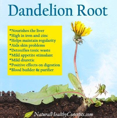 The Plant Detox Book by 25 Best Ideas About Dandelion Root Tea On