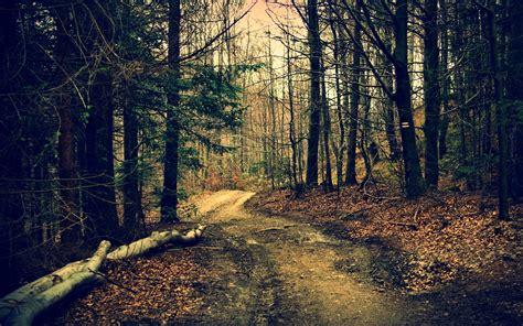 background hutan forest path wallpaper 7458 2560 x 1600 wallpaperlayer com