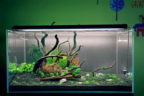 Lu Aquascape 34 best aquarium inspiration images on fish