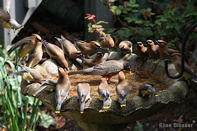 birdbaths