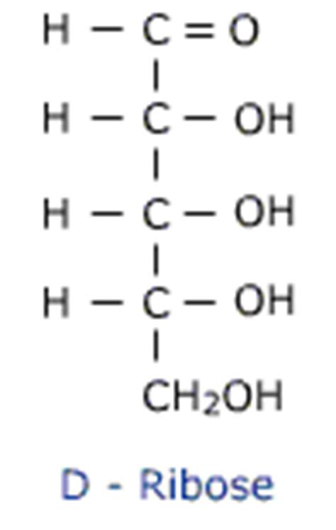 d ribose carbohydrates chem guide carbohydrates