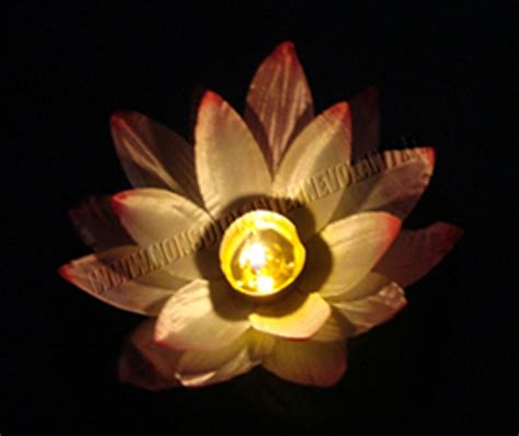 fiore di loto rosa lanterne galleggianti fiore di loto rosa