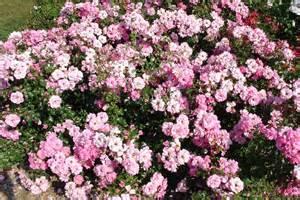 6 flower bushes