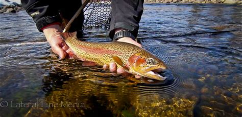 fly fishing tips archives colorado fly fishing tips archives page 7 of 8 colorado fly
