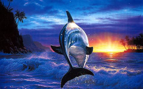 colorful dolphins colorful dolphin wallpaper wallpapersafari