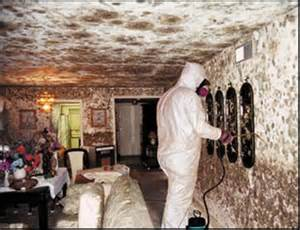 op decke remove mold from walls how to remove black mold