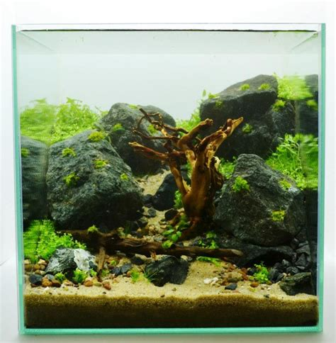 layout aquascape step layout 30cm 12in cube way to happiness by adrie