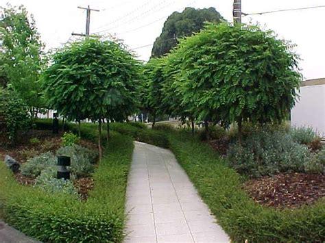 Types Of Garden Herbs - mop top hello hello plants amp garden supplies