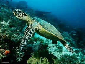 Download sea animals wallpaper and backgrounds