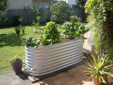 Raised Vegetable Garden Beds Corrugated Iron Corrugated Metal Raised Garden Beds Diy Raised Garden Bed