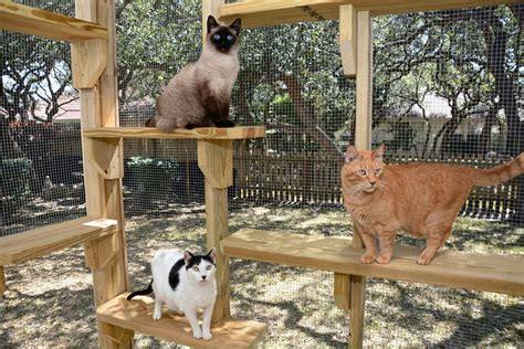 backyard cat safety outdoors cat enclosures cages purrfect love