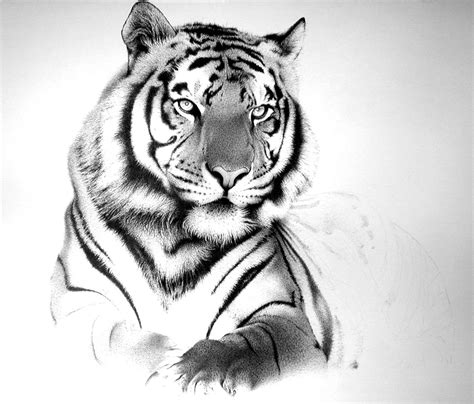 white tiger tattoos tiger big by amraa on deviantart