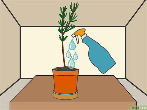 Plants That Grow In Dark Rooms | 3 formas de sembrar esquejes wikihow