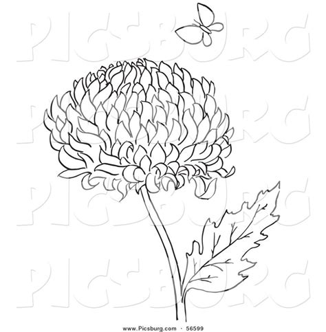 mums colouring book of 1530725488 chrysanthemum flower drawing sketch coloring page