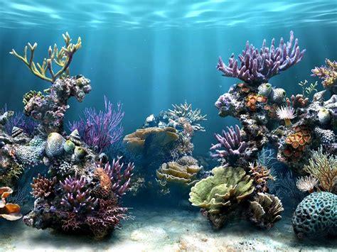 design zeeaquarium salt water aquarium ideas aquarium addicts anonymous