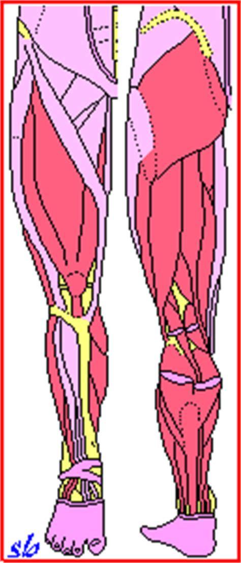 10 piegamenti testo pallavolo e allenamento con i pesi sport e medicina