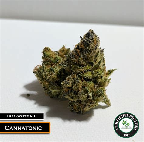 Garden State Dispensary Menu Cannatonic Strain Information 187 Mmp Directory