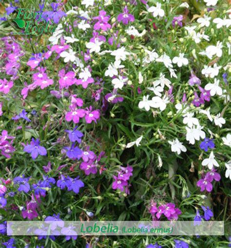 fiori di co nomi nomi di fiori come si chiama diamo un nome a fiori e