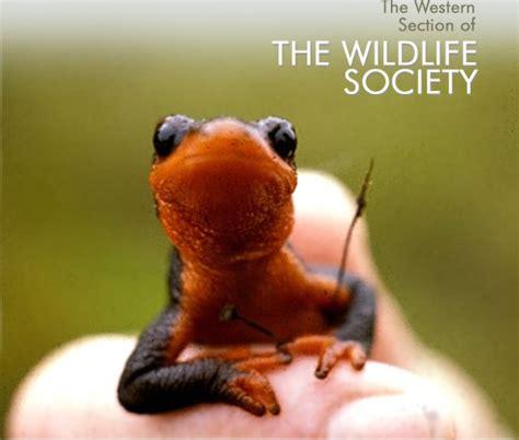 wildlife society western section western section of the wildlife society 28 images 2016