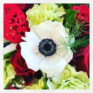 anemone fiore significato il fiore di oggi gli anemoni