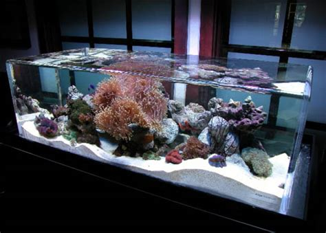 Fish Decorations For Home by Home Made Fish Aquarium Decorated Home Design Elements