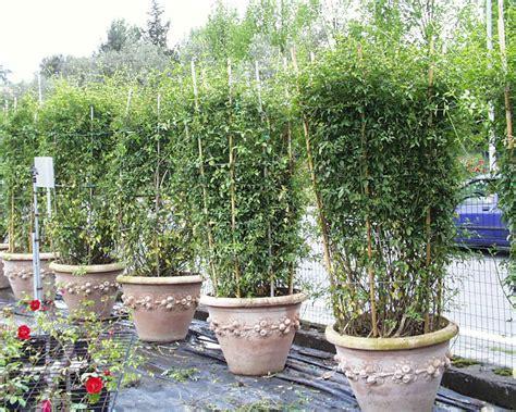 fiori ricanti resistenti al freddo piante esotiche da giardino banano piante da giardino