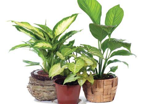 interior plants indoor plants bht315 online course