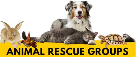 rescue groups adopting from an animal shelter or rescue the autos post