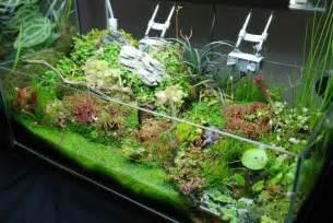carnivorous plant terrarium images