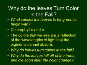 begins when the leave home and the dies books plant pigments ch 10 photosynthesis ppt