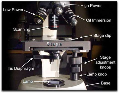 What Is A Adjustment Knob by Efs 162 Fall 2004 2 Topic Microscope December 2004