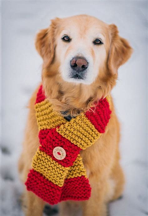 dog house clothing best 25 crochet dog clothes ideas on pinterest diy crochet dog sweater crochet dog