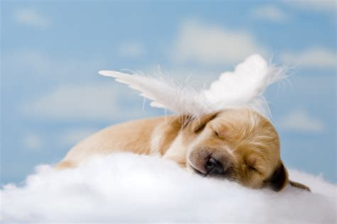 puppy heaven you found a white feather 121 tarot readings 121 tarot readings