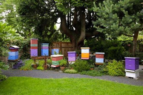 backyard apiary backyard beekeeper preety hives gardening pinterest