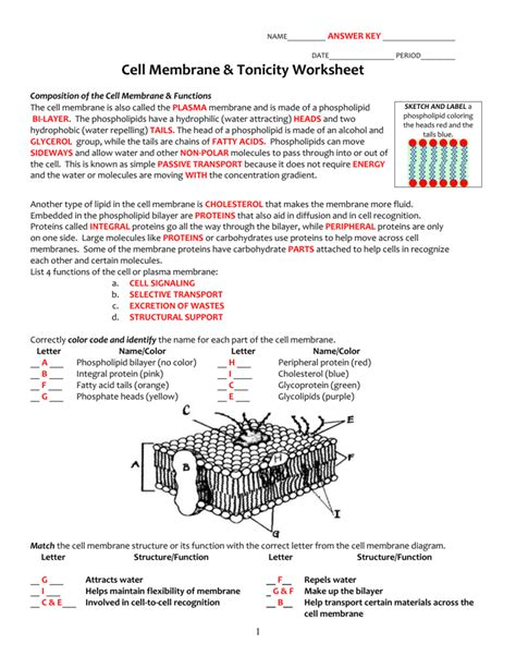Cell Membrane Structure And Function Worksheet by Cell Membrane Worksheet Answer Key Worksheets