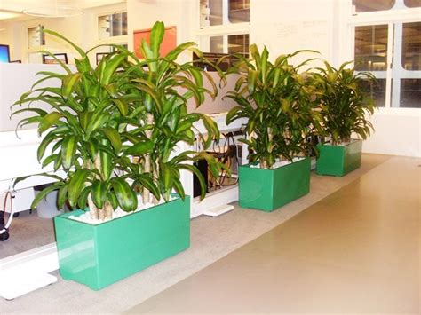 indoor plants hire  offices businesses perfection