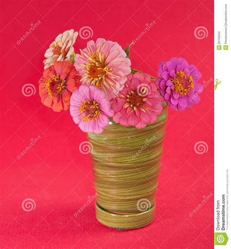 red floral l shades zinnia flowers in different shades of pink stock photo