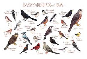 iowa backyard birds field guide print watercolor