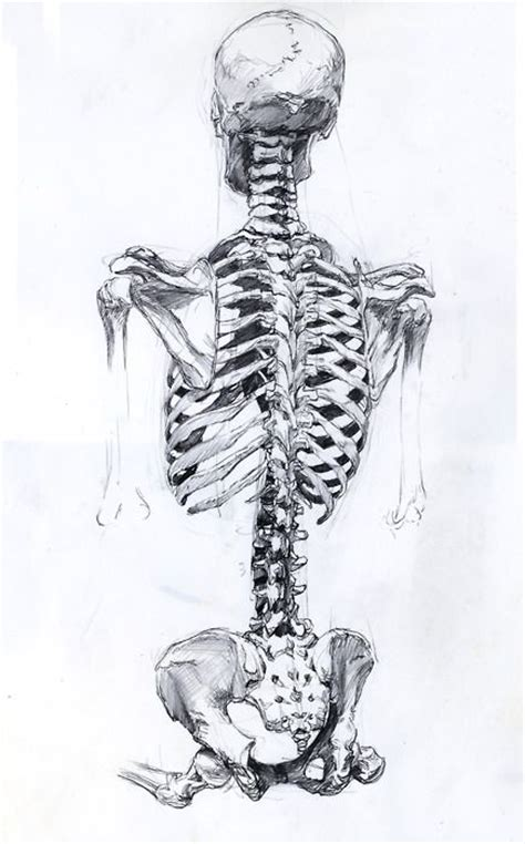 1000 ideas about skeleton drawings on pinterest