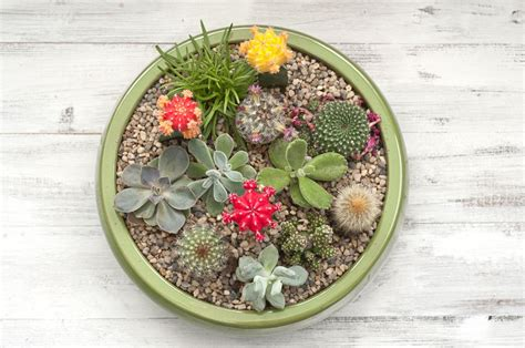 Beautiful Bathroom Ideas by Making A Succulent Plant Container Garden